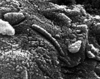 An electron microscope view of meteorite ALH 84001