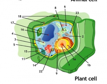 Animal, plant and bacterium cells.