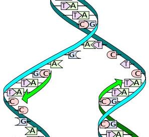 Diagram of DNA code replicating