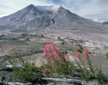 Recolonisation of plants at Mount St Helens, 1984