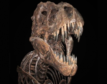 Tyrannosaurus Rex - Credit: Photo: Quadell. Smithsonian National Museum of Natural History, Washington DC.