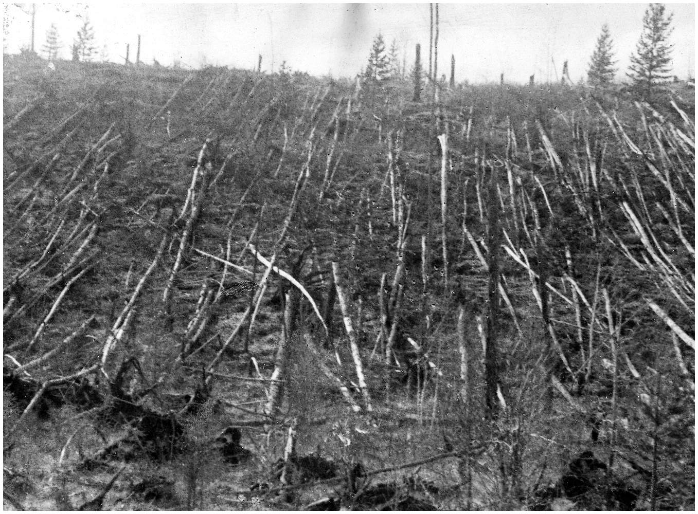 Uprooted trees at Tunguska - Logical Mystery